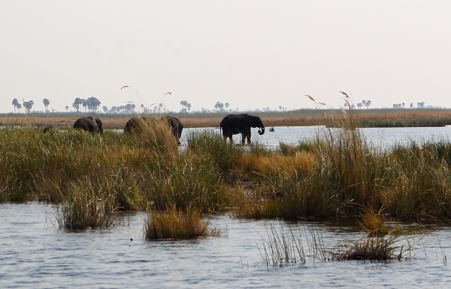 Elephants in the lagoon 3